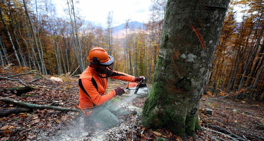 Nestalo 12 milijuna metara kubika drveta? Ured EU javnog tužitelja istražuje prijavu protiv Hrvatskih šuma