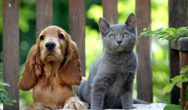 Stručnjaci Američkog centra za kontrolu trovanja životinja sastavili su popis najotrovnijih namirnica kako biste mogli izbjeći loše posljedice.