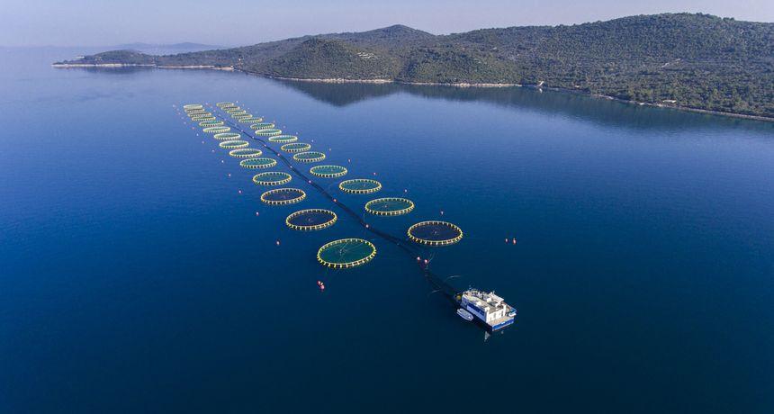 Cromaris tijekom 2020. godine prodao 10 tisuća tona ribe