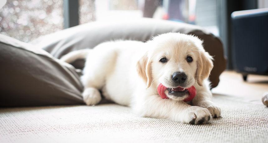 Jeste li znali da pravilnom prehranom kod štenaca možete pojačati njihov imunitet za 50 posto?