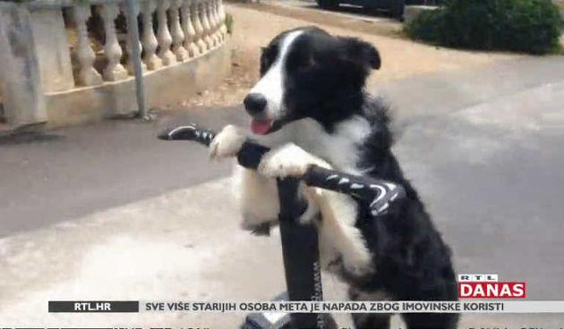 Upoznajte Kasiu, najpametnijeg psa u Hrvatskoj, pa i šire (thumbnail)