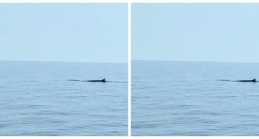 Snimljen kit kod Sušca! Pogledajte kako izgleda ova veličanstvena životinja