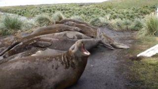 Ovo još nismo čuli: Morate vidjeti kako se glasa ovaj tuljan koji je postao hit na mrežama