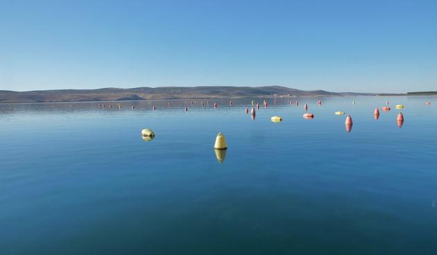 Tehnologijom iz Novog Zelanda do boljeg uzgoja dagnji u Zadarskoj županiji