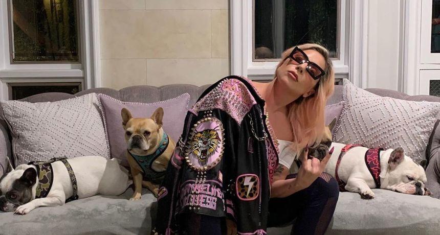 Upucan šetač pasa Lady Gage: Pjevačica ponudila pola milijuna dolara otimačima da joj vrate ljubimce