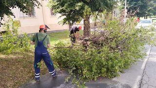 Olujni vjetar rušio drva u Osijeku