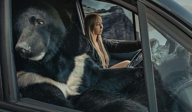 Medvjed suvozač