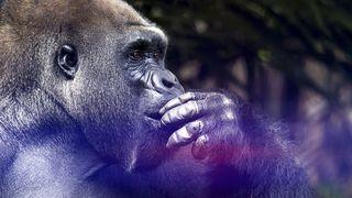 Čuda životinjskog svijeta