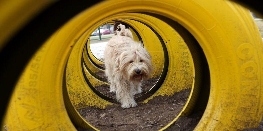 U Varaždinu otvoren najveći park za pse u Hrvatskoj!