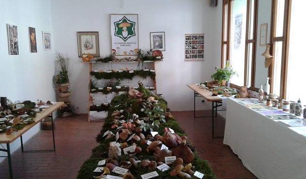 U nedjelju izložbom gljiva u Galeriji ZILIK počinje 36. Gljivarski tjedan - nastavlja se predavanjem i izletima