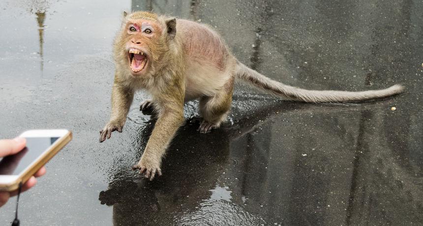 Veterinar umro od rijetke zaraze koju prenose majmuni: Baš kao i kod covida, prvo je sve sličilo na gripu...