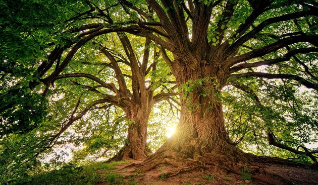 Drveće