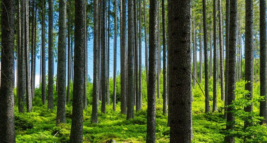 Na Ilovcu i Pojatnom do 15. studenog uklanjanje starih hrastova, Hrvatske šume: Ne ulazite u ta područja, poštujte znakove!
