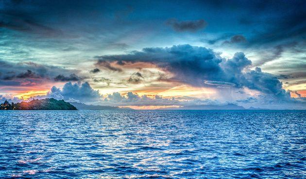 Znate li kako izgleda hranidbeni lanac u moru?