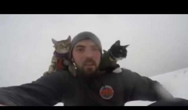 When Your Cats Are Cooler Than You (thumbnail)