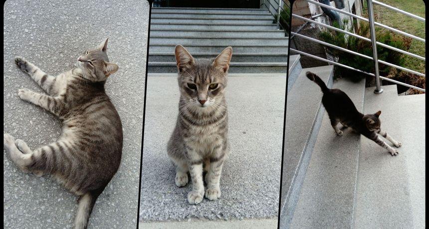 Mačak Lucky postao živa maskota dugoreške bolnice - svako jutro dolazi u vizitu, mazi se i mami osmjehe djelatnika