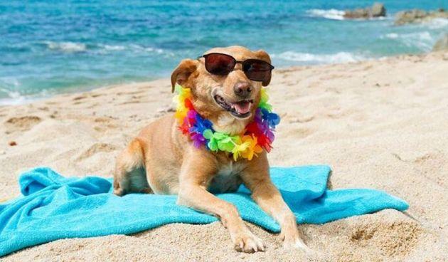 Pas na plaži