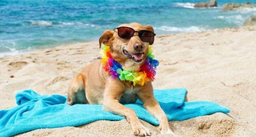 Hoće li zadarske plaže biti dog friendly zone?