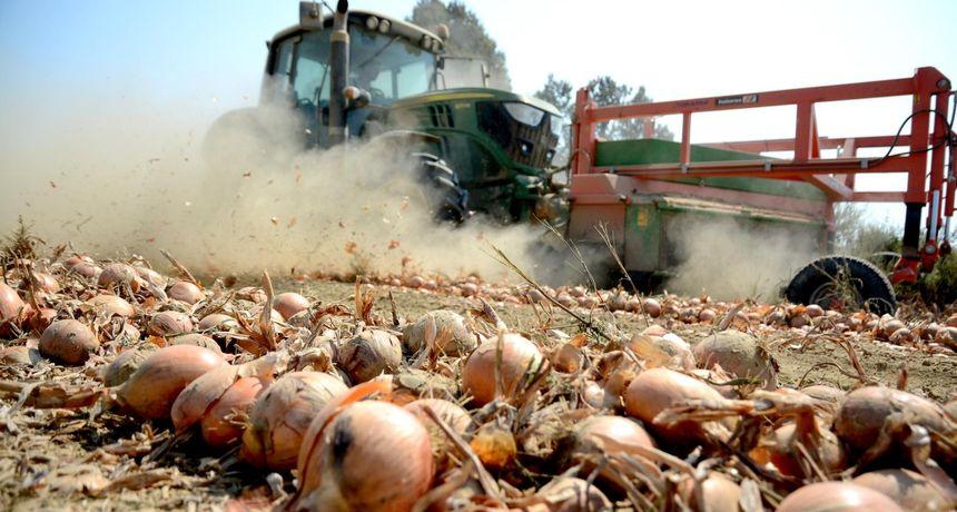 Ministarstvo negira da će hrvatska poljoprivreda iz EU dobiti milijarde kuna manje, nego čak milijardu, i to eura, više