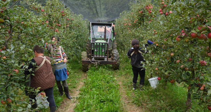 VOĆNJAK NEDELIŠĆE Traži se traktorista za poslove u voćnjaku