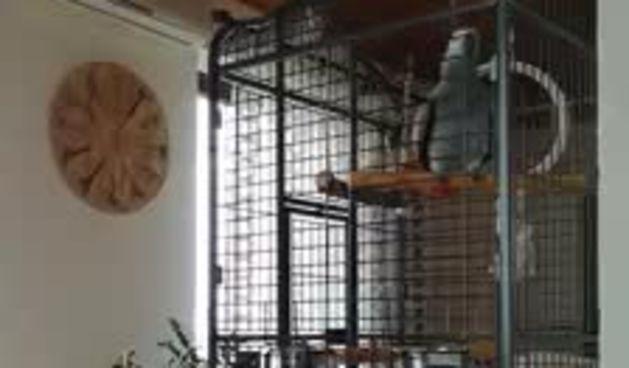 Mitzy legenda! Papiga joj progovorila turski, a čekajte tek kad čujete njenu obradu Dine Dvornika (thumbnail)