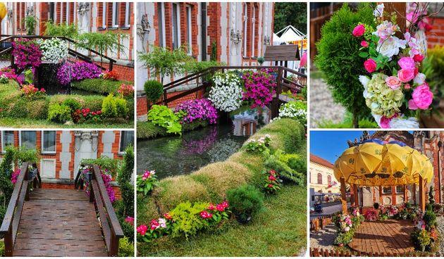 Cvjetna oaza u Čakovcu