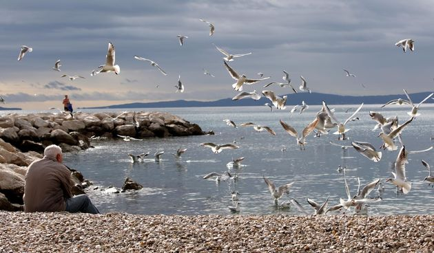 starac more galebovi