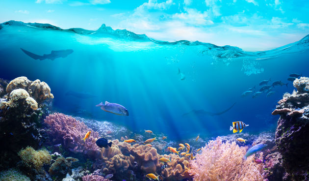 ribe, podmorje, ocean