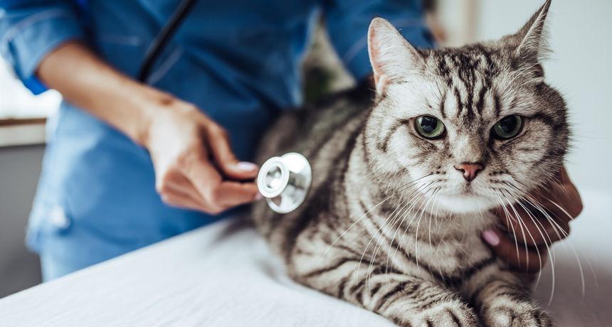 Mačka pozitivna na koronavirus! To je prvi slučaj, a pretpostavlja se da ga je dobila od vlasnika