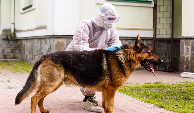 Psi kao metoda provjere koronavirusa