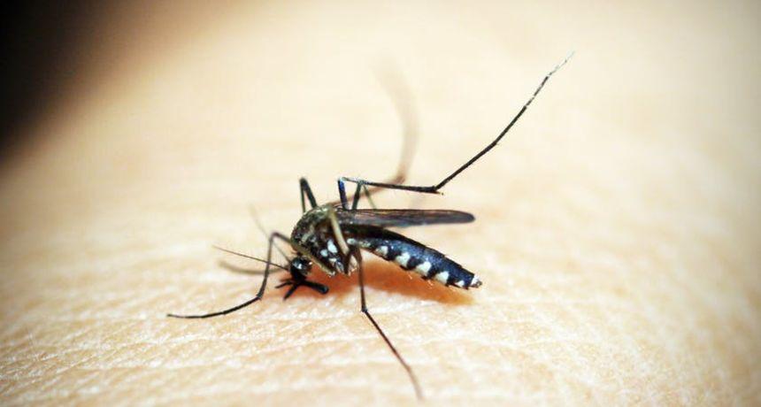Nekoliko trikova uz pomoć kojih ćete se zauvijek riješiti komaraca