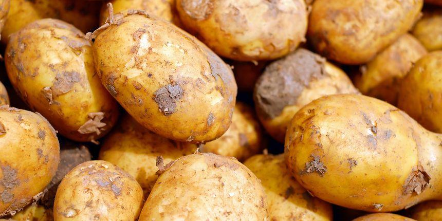 Tone krumpira propadaju, a mi kupujemo egipatski, francuski... Proizvođači ogorčeni: 'Svaka ta kila viška je direktni šamar'