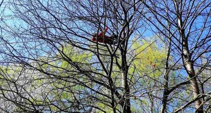 Na Vinici odmarao na drvetu na visini od 15-ak metara, pa zabrinuti izletnici zvali HGSS - ipak nisu trebali intervenirati