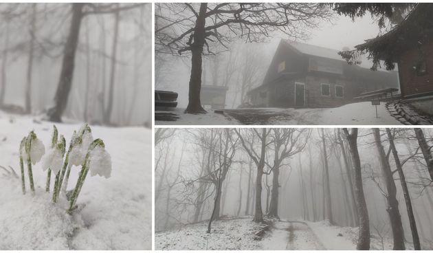 FOTO Ivanščica je opet bijela, snijeg prekrio zvončiće i visibabe