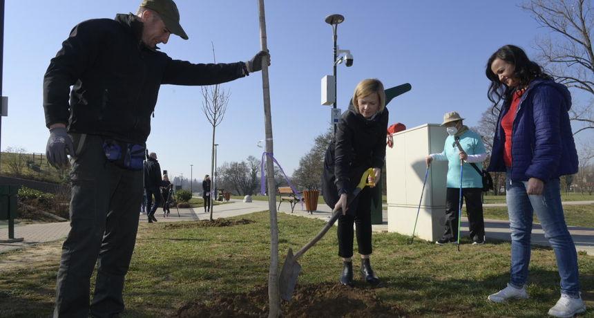 Tjedan sadnje stabala počeo kod Aquatike s tri nova javora - brojne škole i vrtići dobijaju voćnjake, sadi se 3.400 stabala!