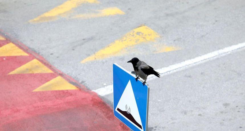 VIDEO Vrane jutros napale čovjeka na Trešnjevci! 'Bile su jako nasrtljive. Baš je bilo gadno'