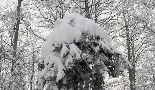 Platak snijeg