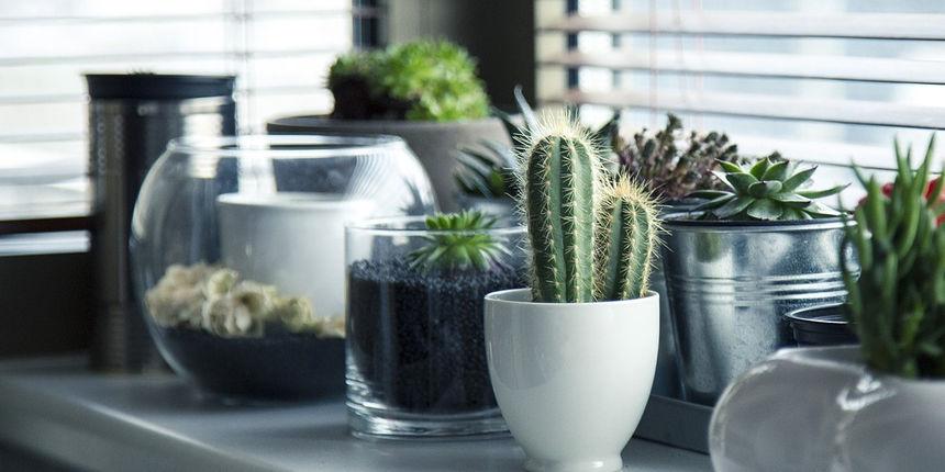 Još uvijek nemate biljke u uredu i kod kuće? Brzo ih nabavite, istraživanje kaže da nas čine sretnijima