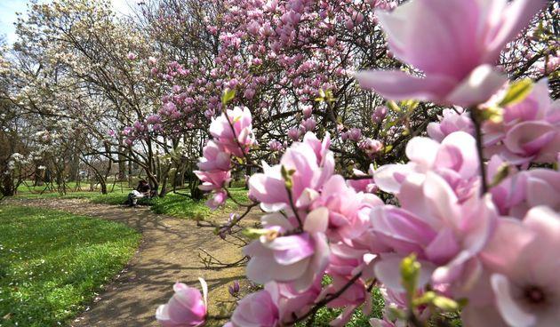 magnolija botanički vrt