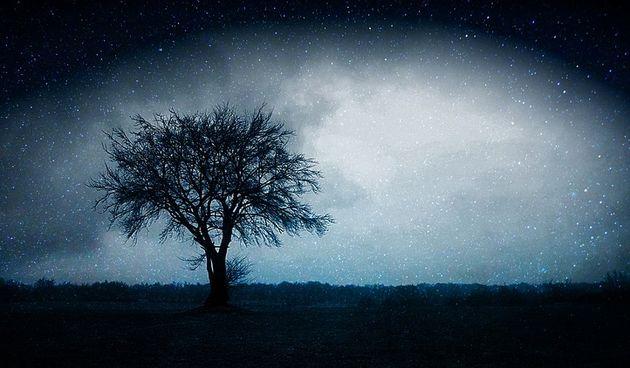 fantasy, drvo, horoskop, mistika, ezoterija, meditacija, snovi, san