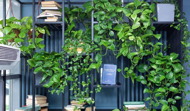 brsljan biljka oaza dom i vrt