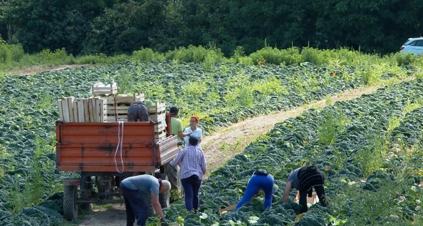 Korona i veliki uvoz tjeraju poljoprivrednike u očaj: Domaće voće i povrće jednostavnije je uništiti nego prodati