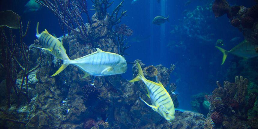 Novo otkriće znanstvenika: Klimatske promjene potiskuju morske vrste prema polovima