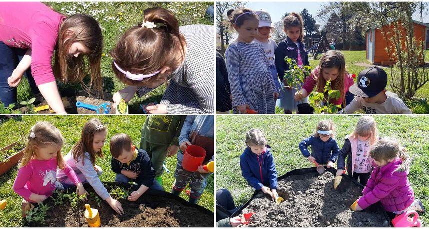 DAN PLANETE ZEMLJE Mališani iz vrtića Cvrčak posadili presadnice u svom dvorištu