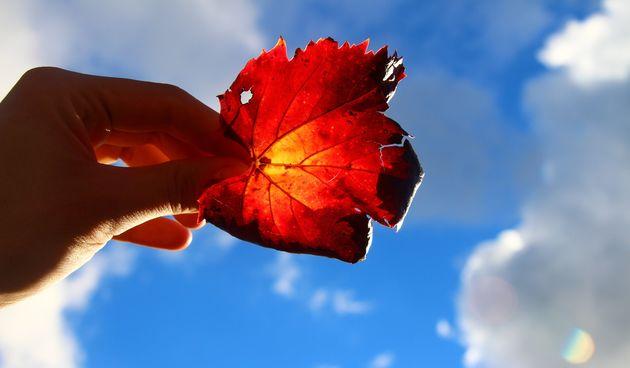 Lišće, list, jesen, optimizam, mašta