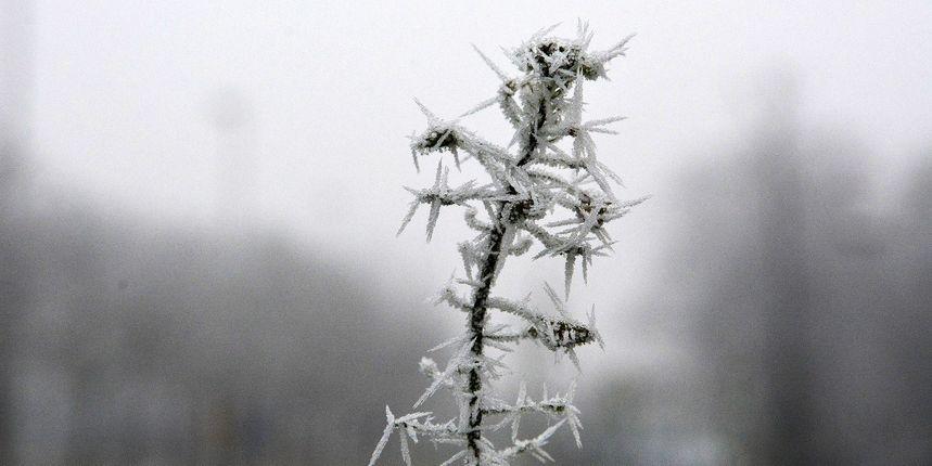 Hladnoća je ovoga proljeća oborila neke rekorde, no svibanj prije samo dvije godine je bio hladniji, piše naš Dorian Ribarić
