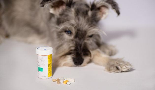 lijek za pse
