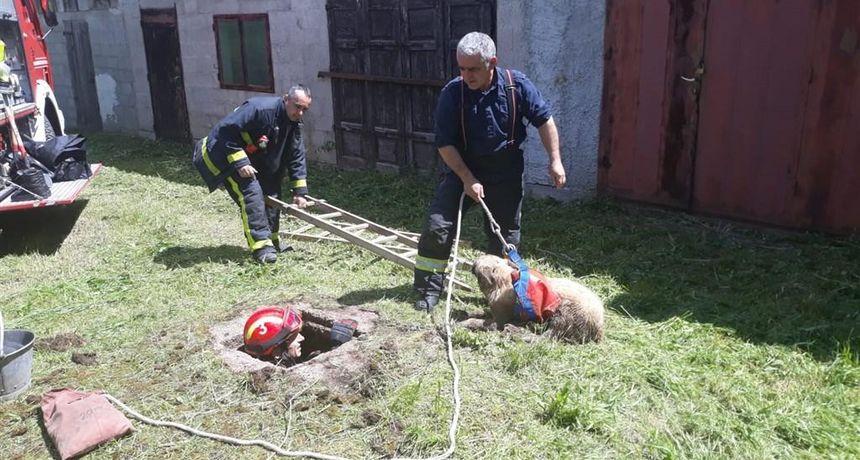 Ogulinski vatrogasci spasili psa - upao je u septičku jamu i cvilio, slučajno su to čuli djelatnici Hrvatskih šuma