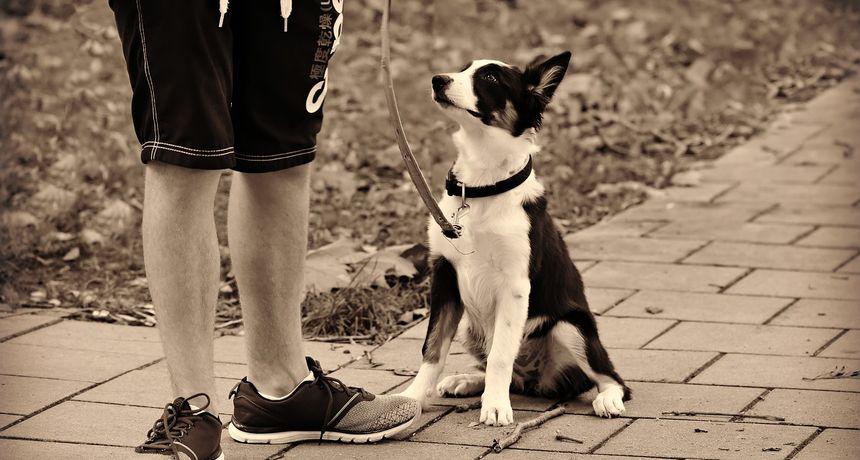 Žena podijelila kako znati da je prevruće za prošetati psa: Koristite ovaj trik od 5 sekundi