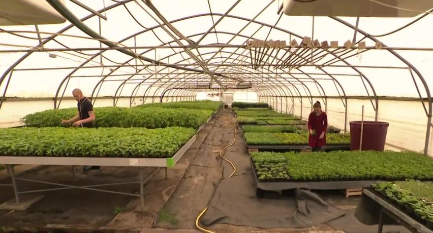U stakleniku osječke Poljoprivredne škole danas kreće prodaja čak 50 tisuća sadnica povrća i cvijeća